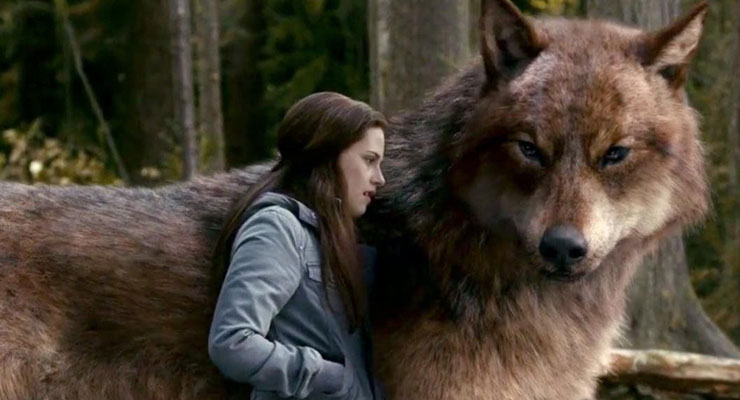 Professional development skill of taking strategic risks in depicted in this scene of Twilight with Bella and a wolf.